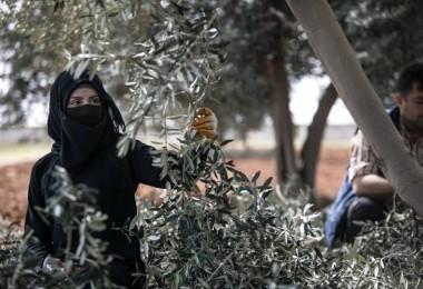 FAO'dan Suriyeli Sığınmacılara Tarımsal İşgücü Eğitimi