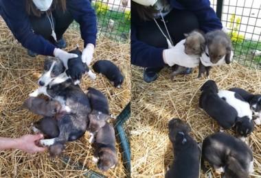 Öksüz 6 Çakal'a Önce Bir Ceylan Daha Sonra Bir Köpek Annelik Yaptı
