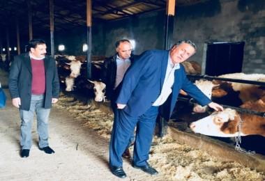"""Gürer: """"Besici Kan Ağlıyor Neden Etin Fiyatı Artıyor, Yine Bir Filim Dönüyor"""""""