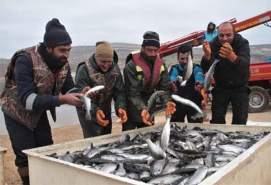 İtalya, Almanya, Hollanda ve Rusya'nın balığı Elazığ'dan