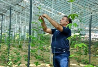 Alanya'da passiflora bahçesi kuran gurbetçi, 15 dekardan yılda 1,5 milyon lira kazanacak