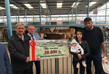 114 Genç Çiftçiye 570 Adet Büyükbaş Hayvan Dağıtımına Başlandı