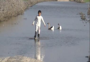 Amik Ovasında birçok tarım arazisi sular altında kaldı