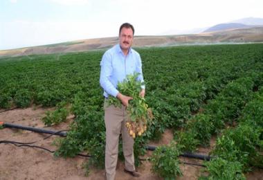 Sertifikalı Patates Tohum Üretiminde Yüksek Verim Beklentisi
