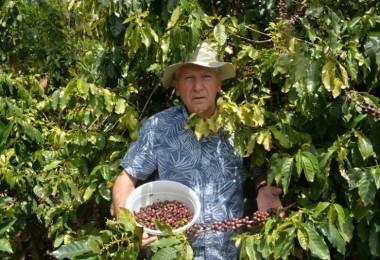 Türkiye'de İlk Kez Kahve Meyvesi Üretti