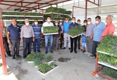 Turgutlu'lu Üreticilere 200 bin Fide