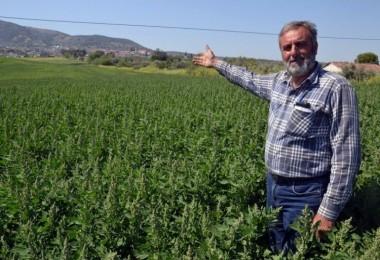 Çiftçinin Yeni Gözdesi: Zahmeti Az Getirisi Yüksek!