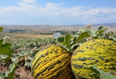 İyi Tarım Ve Organik Tarım Destekleme Başvuruları Başladı