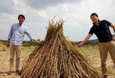 Japonlar 'Suşi' Susamı İçin Muğla'da