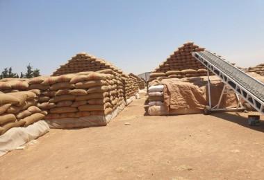 Türk tohumu Ortadoğu topraklarında yeşeriyor
