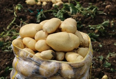 Ucuz patates ve soğana kotalı satış