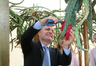 Akdeniz Üniversitesinde Pitayaların İlk Hasadı Yapıldı
