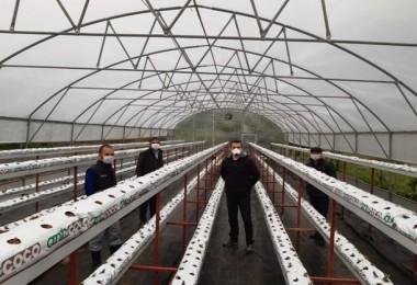 Topraksız Tarım Çilek Seralarının Kurulumu Gerçekleştirildi