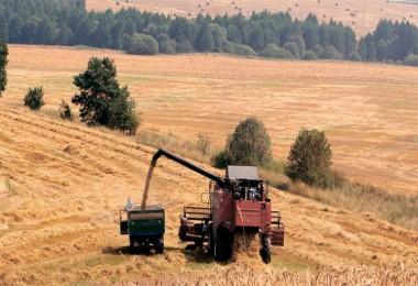 Türkiye Takipte: Rusya'da Yağışlar ve Kuraklık Tahıl Hasadına Darbe Vurabilir