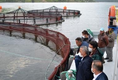 Samsun'da Alabalık Üretim Kapasitesi 7 Milyon Tona Yaklaştı