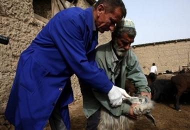 FAO'nun  Sınıraşan Hayvan Hastalıkları Toplantısı İstanbul'da Devam Ediyor