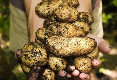 Sattığımız Patatesleri Suriye'den Geri Aldık İddiası