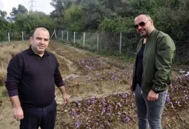 İki Girişimci Arkadaş, Safran Ve Salep Bitkisi Yetiştirdi