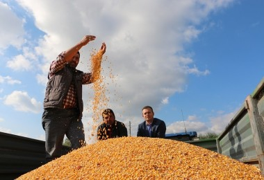 Dane Mısır Veriminde Yüzde 50 Artış Sağladılar