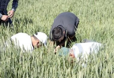 Yozgat'ta hububat üretiminde 'süne böceği' alarmı