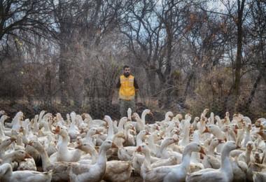 Aradığı İşi Bulamayınca Kaz Çiftliği Kurdu