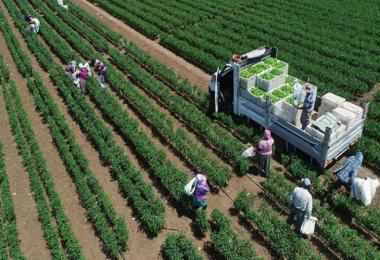 2002'den bu yana sebze üretimi 5 milyon ton arttı