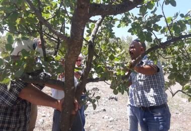 Muğla'lı Üreticilere Antepfıstığı Yetiştiriciliği Eğitimi Verildi