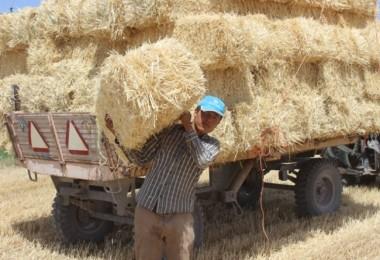 Karapınar'da Buğday Hasatında Sona Gelindi