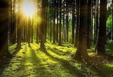 Ormanların Yönetiminde Yeni Anlayış