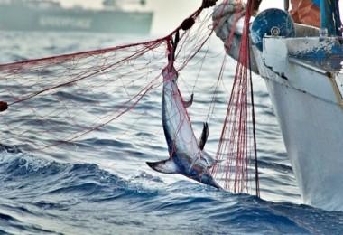 Kaçak Balık Avcılığı Yapanların Sonu Geldi !