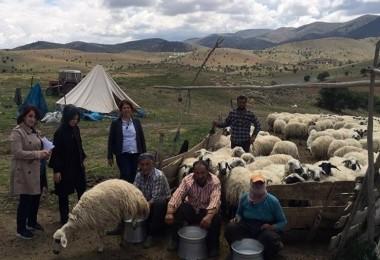 Çoban İstihdamına Tam Destek Sürüyor…