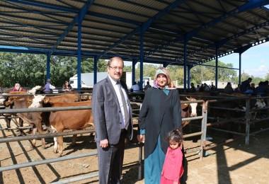 Erzincan'lı Genç Çiftçilere Büyükbaş Hayvan Dağıtımı Yapıldı