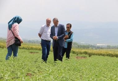 Bolu Toprağı Yeşili Seviyor Verimi İle Fark Yaratıyor