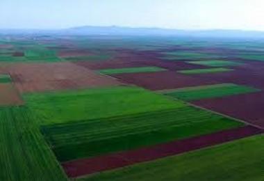 """Gürer: """"Anadolu'da yabancı firmalar verimli toprakları kapatıyor"""""""