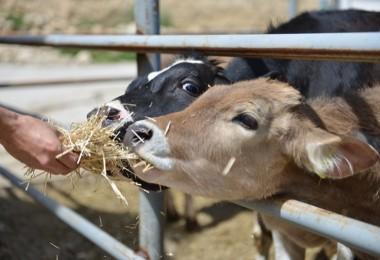 """Gürer'den """"Aile Sistemine Dayalı Hayvancılık"""" önerisi"""