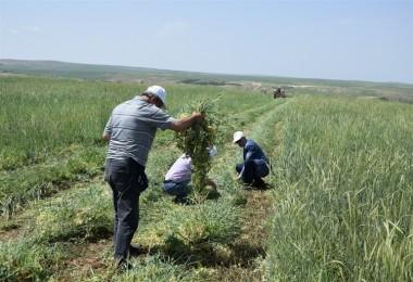Toprak İşlemesiz Tarım İle Hem Verim Hem Destek Aldılar