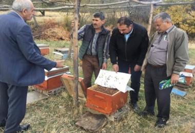 Tokat'ta 'Japon' Eşek Arıları, Bal Üreticilerinin Kabusu Oldu