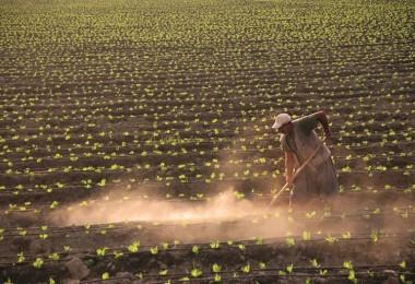 Tarımsal Üretim İçin Faizsiz Ve Düşük Faizli Kredi Kullanım Esasları Açıklandı