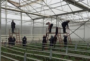 Suriyeli Mültecilere Serada Sebze Üretimi Eğitimi Veriliyor
