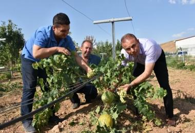 KOP İdaresi Desteği İle Aksaray'da Meyvecilik Gelişiyor