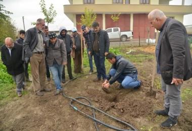 Büyükşehir'den çiftçilere fidan ve gübre desteği
