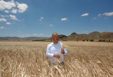 Yerli Tohumlarımıza Sahip Çıkmak İsteyen Çiftçilerimize Siyez Buğdayını Tavsiye Ediyorum