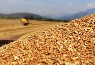 TMO Yurt Dışından Tonlarca Buğday Ve Arpa Alacak