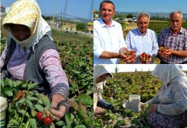 20 Yıl Önce 3 Çiftçi İle Başladılar Şimdi İhracatı Düşünüyorlar