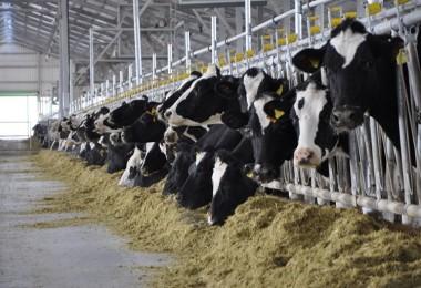 Süt Üreticilerinin Zam İsyanı