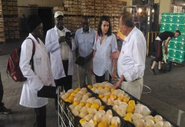 TİKA'dan Kenyalı Uzmanlara Mersin'de Narenciye Tarımı Eğitimi