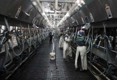 Toplanan İnek Sütü 878 Bin 593 Tona Yükseldi