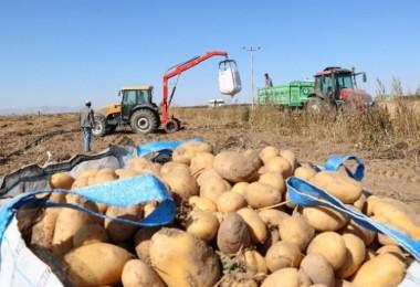 Patates Üreticisi, İhracat Ve Tanzim Satışı İstiyor