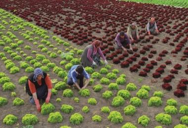 Çiftçinin En Önemli Sorunu Mazot ve Gübre