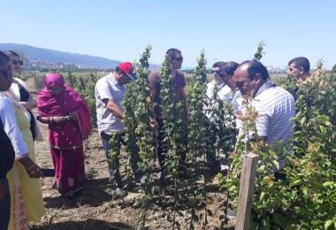 Bangladeş Heyeti Fidan Üretim Yerlerinde İnceleme Yaptı